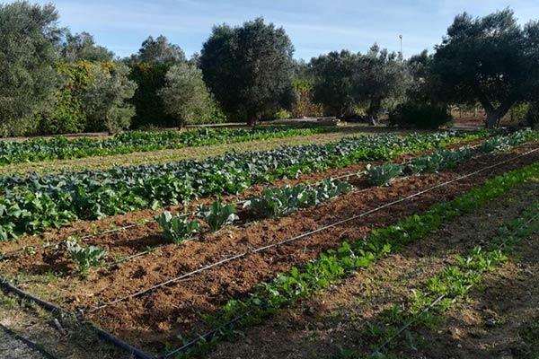 L'orto Giardino