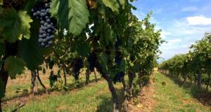 Wine & Food Itineraries in Abruzzo